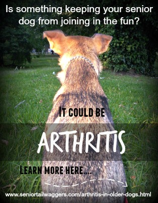 About arthritis in older dogs