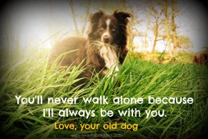 Old dog quote. You'll never walk alone.