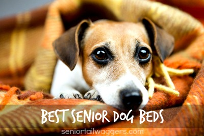 best senior dog beds