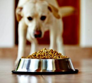 Food Seizures Older Dog