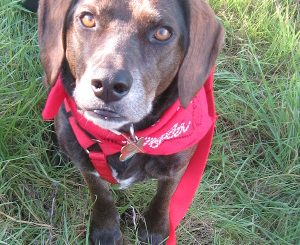 The Importance Of Exercising Older Dogs