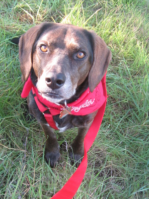 All about exercising older dogs