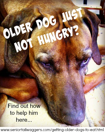 Help for older dogs who don't want to eat