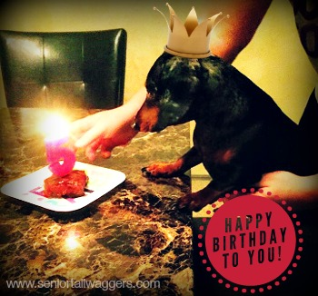 Knox, our dachshund's 5th birthday