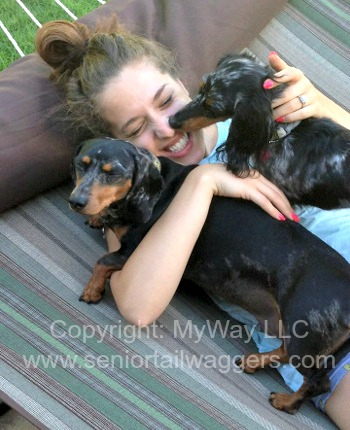 Two dachshunds with owner