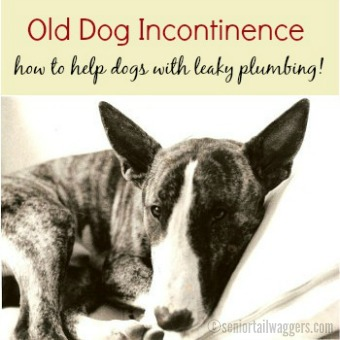 Old Dog Incontinence - Help For Your Leaky Dog