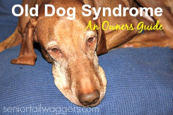 Old Dog Syndrome - What Is It?