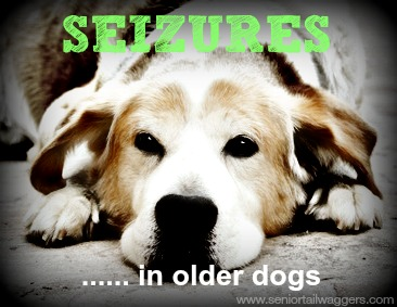 Seizures in senior dogs