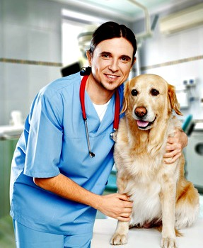 senior golden retriever with veterinarian