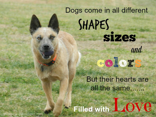 Dog quote. Dog's come in all shapes & sizes.
