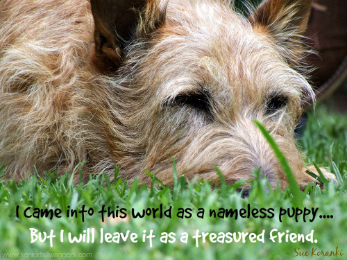 Dog quote. Nameless puppy.