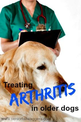 Treating Arthritis In Senior Dogs